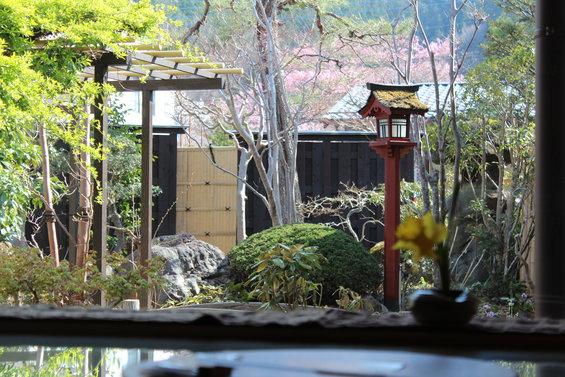 和敬庵から「日光門前町の桜」